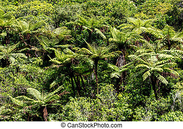 The New Zealand native bush Fern tree