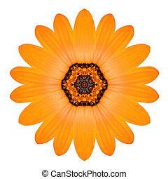 Orange Mandala Flower Ornament Kaleidoscope Pattern Isolated...