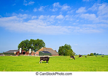 Countryside with farm and cows on a grassland