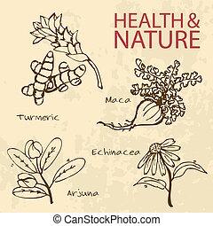 Handdrawn, Illustration, -, santé, et, nature,...