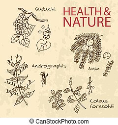 Handdrawn Illustration - Health and Nature Set Collection of...