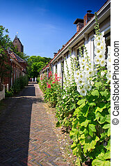 Alcea rosea flowers standing against houses in a street