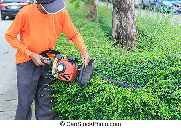 A man trimming hedge at the street