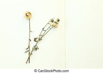 Dried flowers on mulberry paper