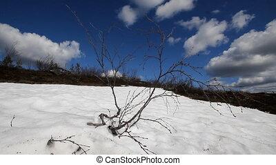 spring thawing of snow  polar circle