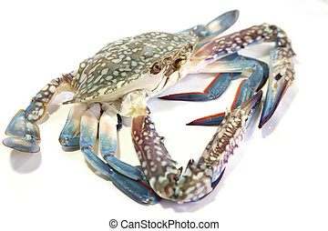 Fresh raw crab - Whole fresh raw king crab on plate
