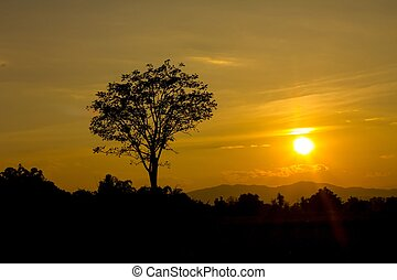 Beautiful landscape image with sun and trees silhouette at...