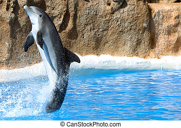 Dolphin dancing in water in Loro Park, Tenerife, Canary...