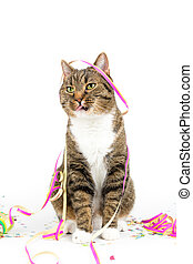 party cat - tiger cat with funny party decoration against...