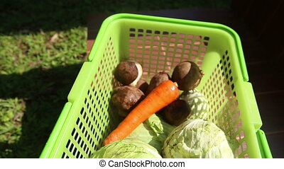 Vegetables in green basket - cabbage, carrot, beet, potatoe...