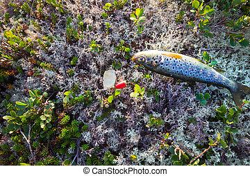 pesca, Salmón, pez, de, el, norte, en, Hilandero,...