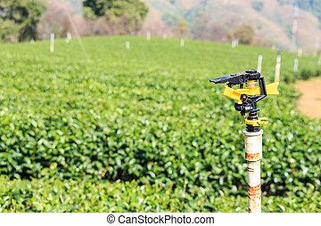 Sprinkler and tea plantation at Doi Mae Salong in Chiangrai...