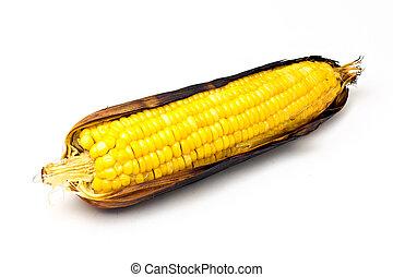 single an ear of corn isolated.