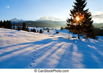 spruce tree shadow at sunset in Alps