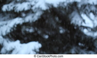 Snow and trees Shallow DOF - Snow falling with conifers in...