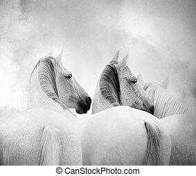 馬, 白色
