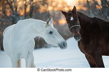horses communicating in winter