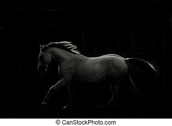 branca, cavalo, corrida, em, escuro,