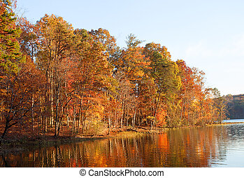 Colorful lakeside treeline - Line of autumn colored trees...