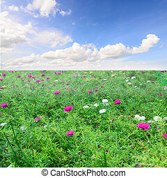 Colorful meadow with blue sky.