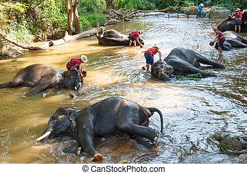 Thai elephant was take a bath with mahout (elephant driver , ele