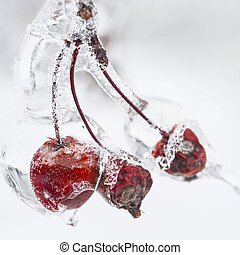 Crap apples on icy branch - Three red crab apples on branch...