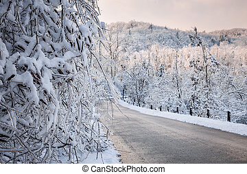 Scenic road in winter forest - Heavy branches covered with...