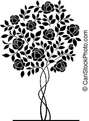 Rose bush. - Rose garden bush isolated over white...