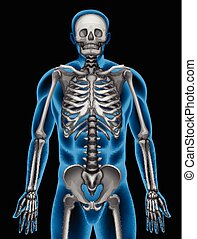A mans skeleton system on a black background