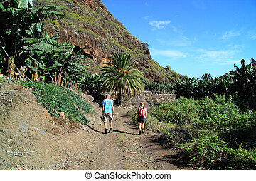 Banana plantation - Walking along the banana plantation