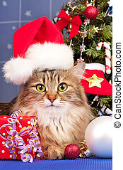 Siberian cat - Beautiful siberian cat near Christmas spruce...