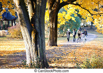 Group of young people in the alley in autumn park Riga,...
