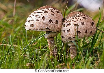 fungos, cogumelos, floresta