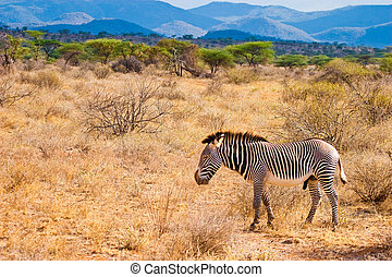 步行,  serengeti,  zebra, 動物