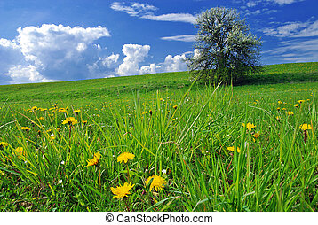 Spring landscape - Beautiful spring landscape with tree in...