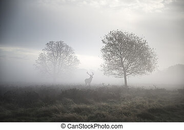 Red deer stag in atmospheric foggy Autumn landscape - Red...