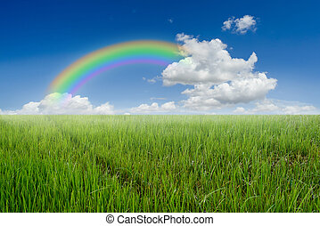 Rice field rainbow and blue sky