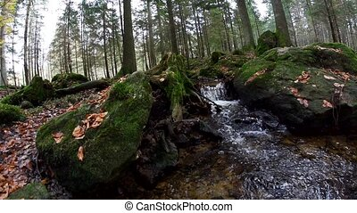 bavarian forest -autumn