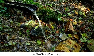 Drinking water in the forest