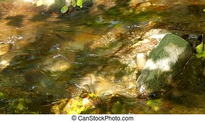 Flowing brook in the forest