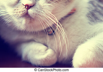 Close up to mouth and whiskers of cat - Close up to mouth...