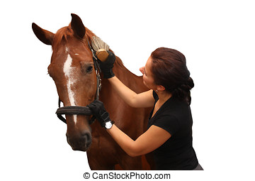 Brunette woman grooming brown horse for the riding isolated...