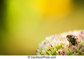 The bee and the flower - The bee on a flower with a...