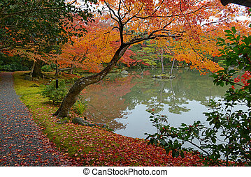 Fall Colors with Japanese Red Maple