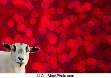 Goat head on red bokeh background like a symbol of 2015 year