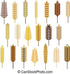 orejas, de, cereales, y, granos, iconos, Conjunto,