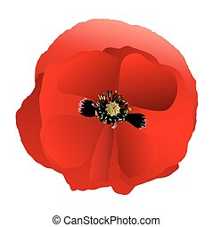 Poppy red gradient - One red poppy made gradient fill
