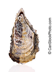 Fresh raw oyster - Single fresh raw oyster on white...