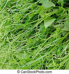 fresco, folhas, chuchu, verde, fundo