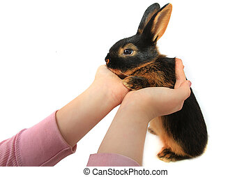 brown rabbit - child holds a rabbit on hands